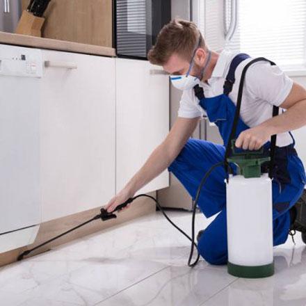 professional carpet cleaner in brisbane