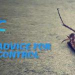 pest control tricks